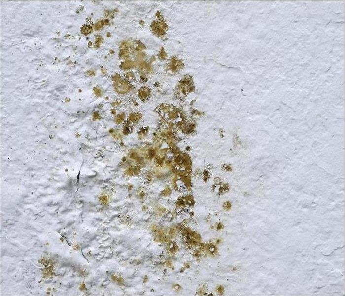 Mold Remediation What You Should Know About Mold in Your Home