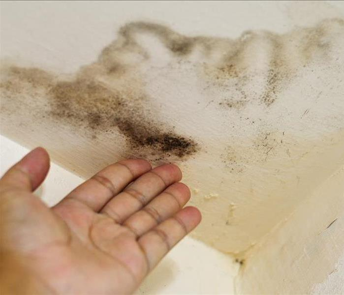 Mold Remediation What Causes Discoloration of Ceiling Tiles?
